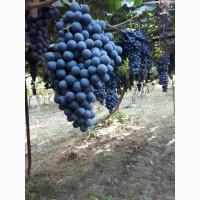 Продается виноград разных сортов