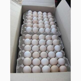 Инкубационное яйцо бройлеров