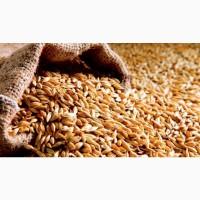 Купим Соевые Бобы, Ячмень, Кукурузу, Пшеницу 5 класс у Крестьянских хозяйств Оптом
