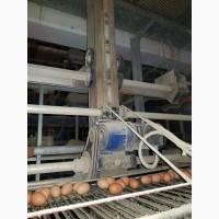 Клеточное оборудование для кур несушек