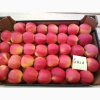 Яблоки красных сортов