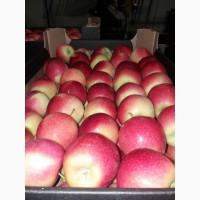 Продам яблоки с Польши