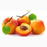 Продам свежие фрукты (абрикос, персик, черешня, слива) опт