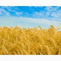 Продам сельхоз предприятие